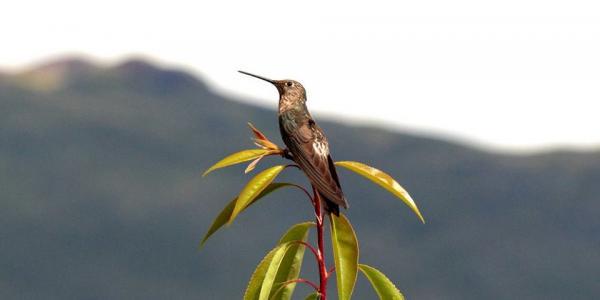 Biodiversité oiseaux Pérou ecotourisme