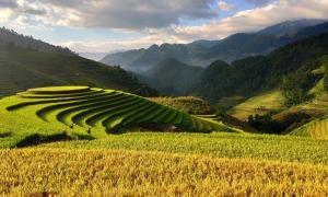 Agriculture Vietnam ecotourisme séjour nature