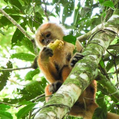 Amazonie singe séjour au pérou