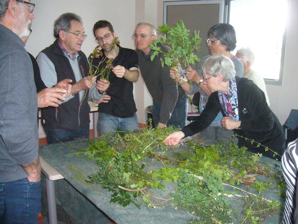 Stage botanique en Touraine