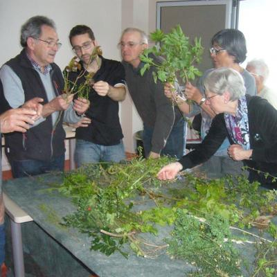Formation botanique