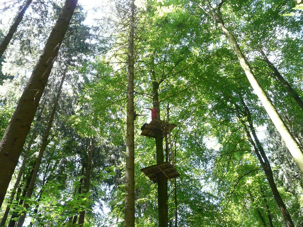 Après midi dans les arbres en Touraine