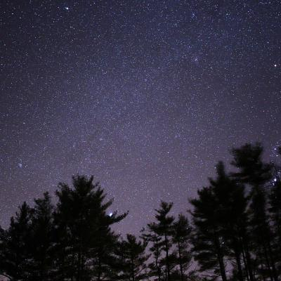 Forêt de touraine la nuit