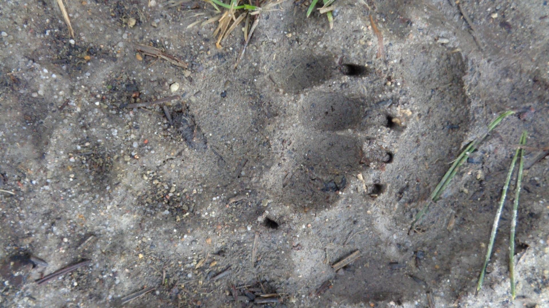 Balade traces et indices des animaux