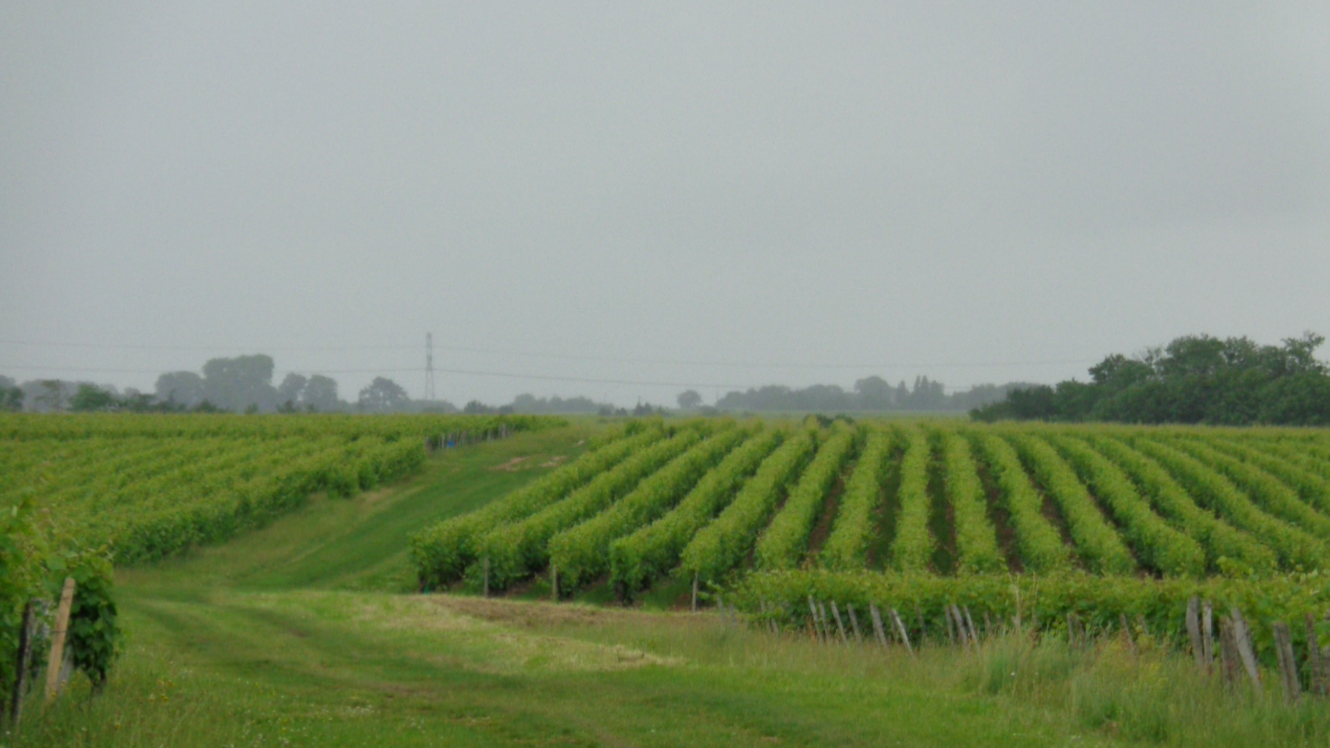 Vignoble de Touraine