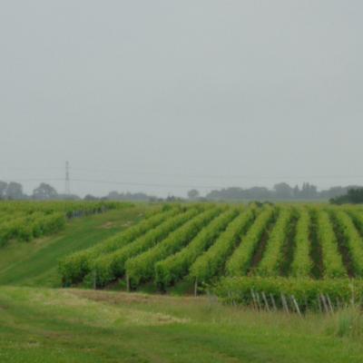 Vignoble de Touraine