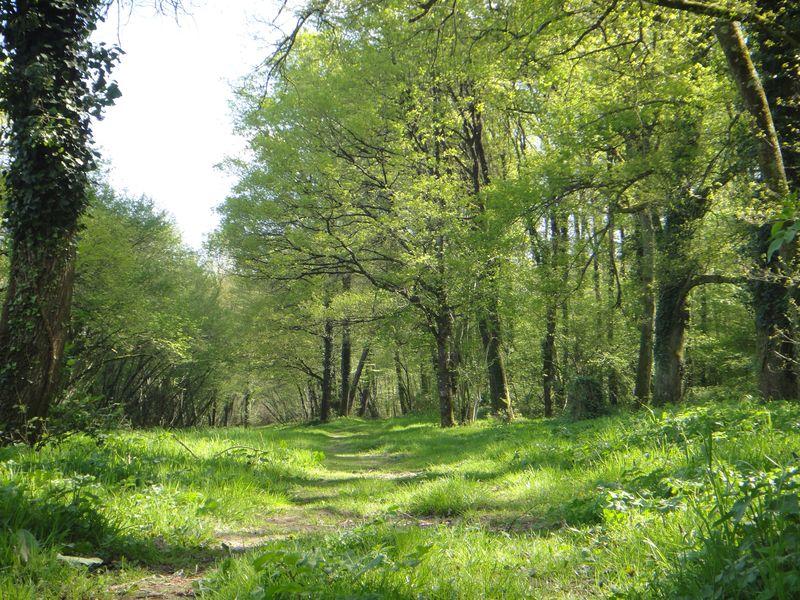 Bivouac en nature en Touraine