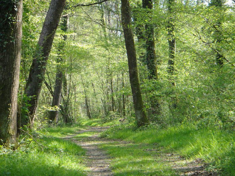 Forêt de Chinon - Excursion val de loire écotourisme