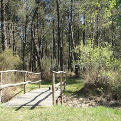 Forêt de Tours Preuilly - Excursion val de loire écotourisme