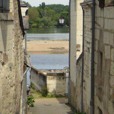 Balade nature a candes saint martin en Touraine