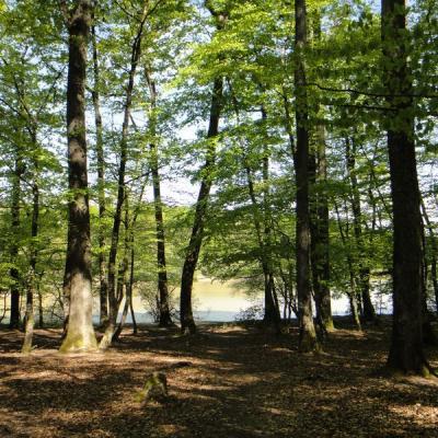 Forêt de Loches - Excursion val de loire écotourisme