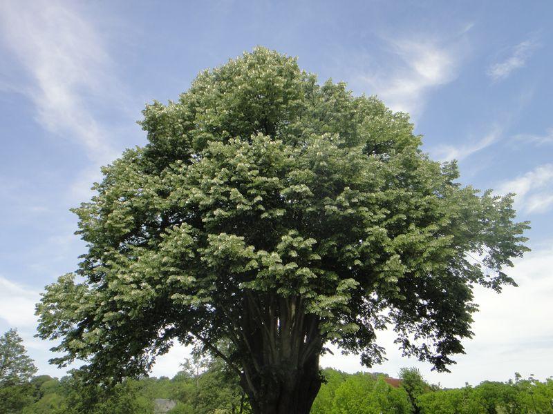Journée nature à Chemillé