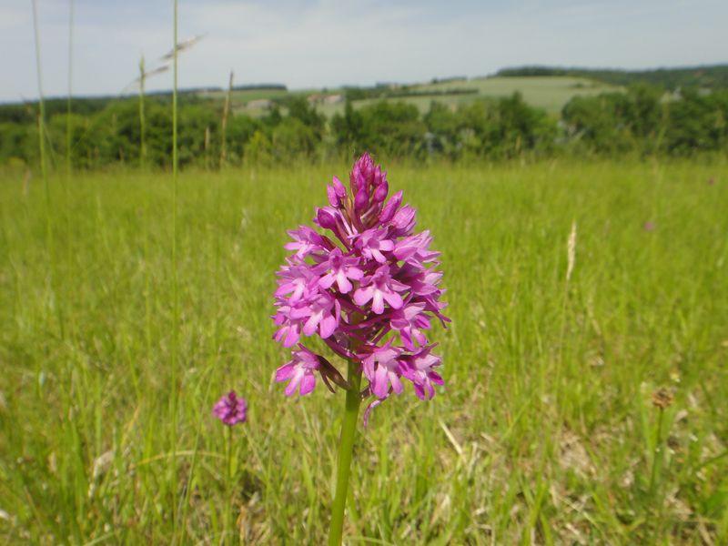 Formation botanique en Touraine