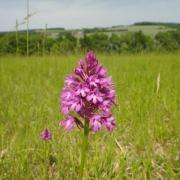 Excursion orchidée sauvage - Val de loire écotourisme