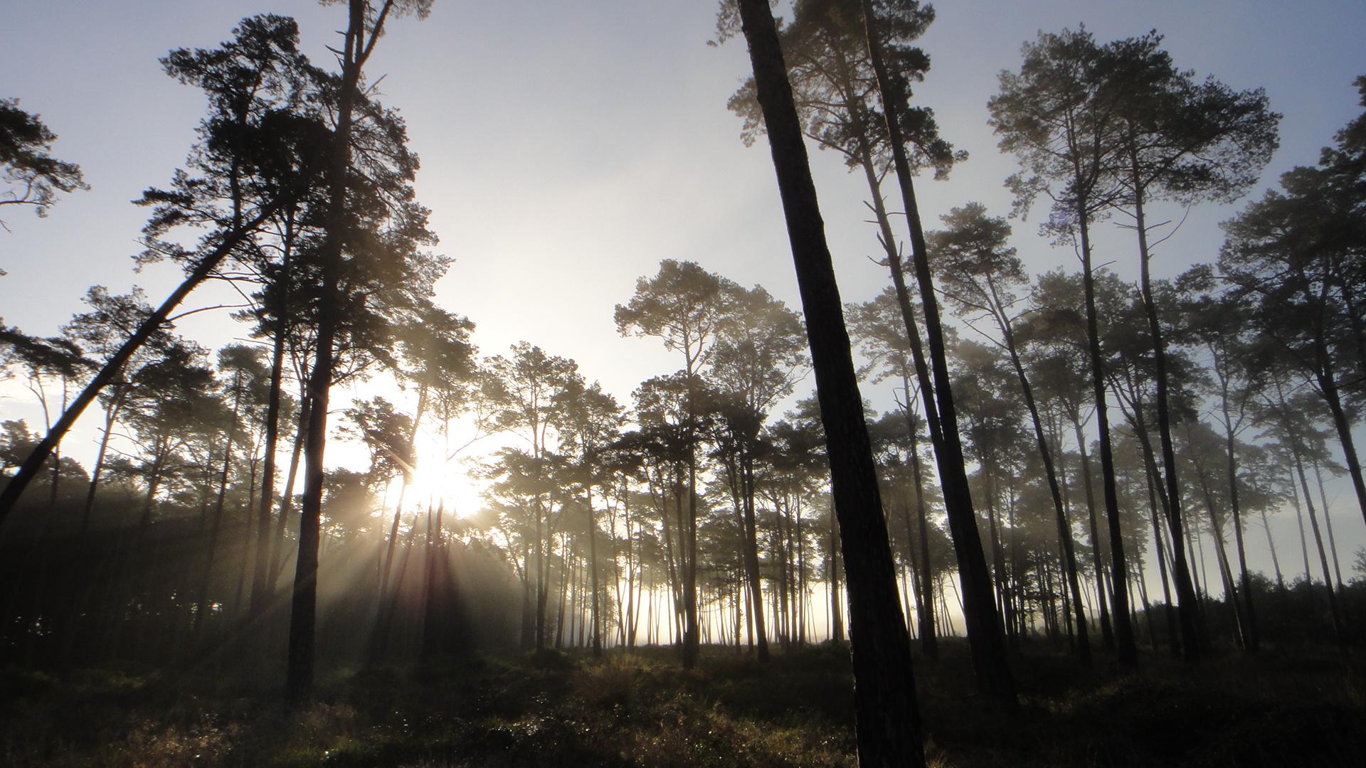 La forêt au petit jour