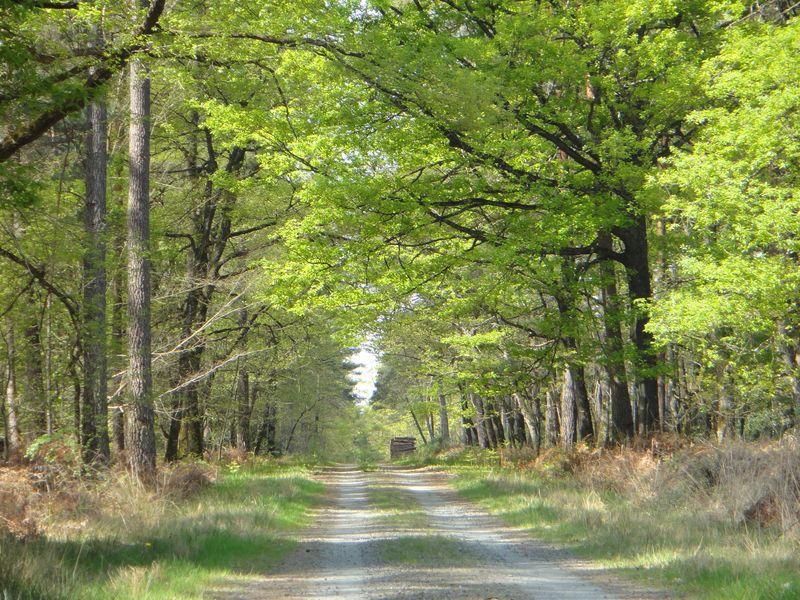 Forêt de Touraine