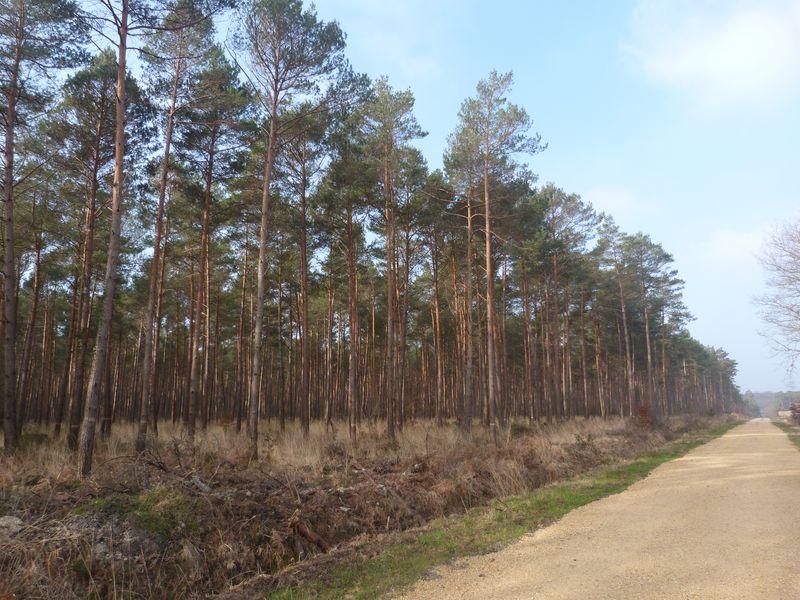 Forêt de Chinon