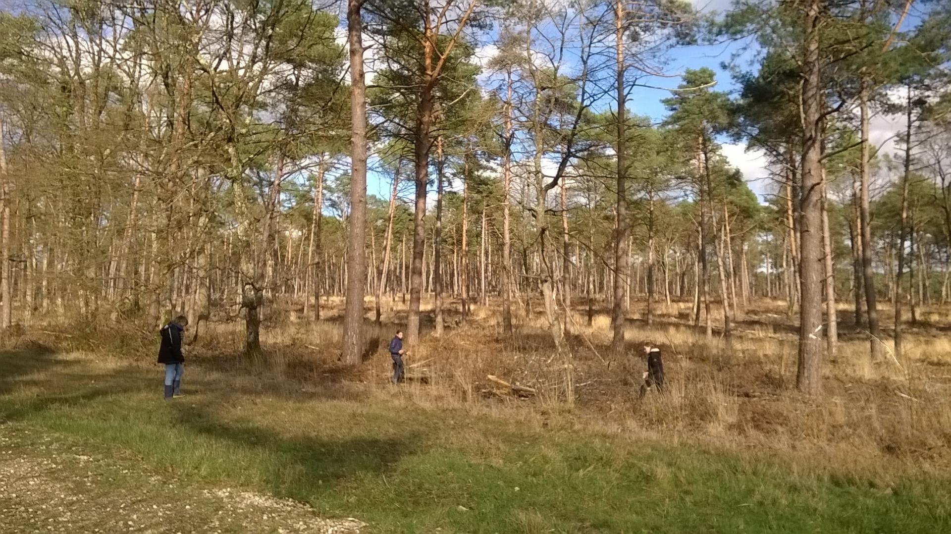 Balade sensorielle en forêt