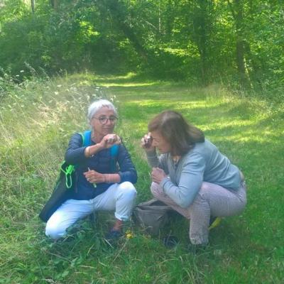 Stage botanique débutant en Val de Loire